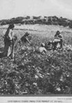Wheat-and-Tares-1900pic